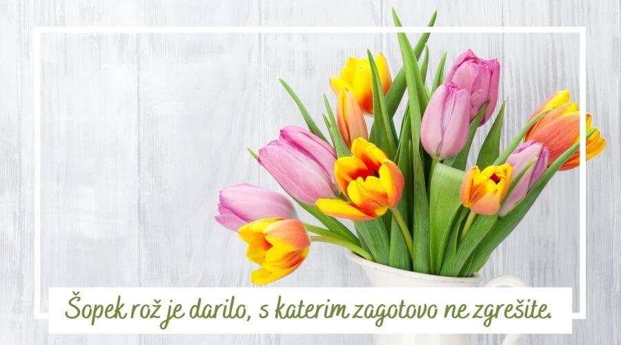 sopek-roz
